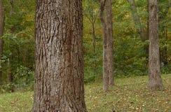 Bomen in een park Royalty-vrije Stock Afbeeldingen