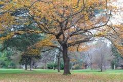 Bomen in een park in de herfstdaling Stock Afbeeldingen