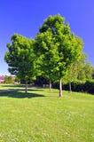 Bomen in een park op een zeer zonnige dag Royalty-vrije Stock Foto's