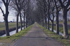 Bomen in een rij Royalty-vrije Stock Foto's