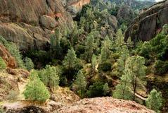 Bomen in een vallei Stock Afbeelding