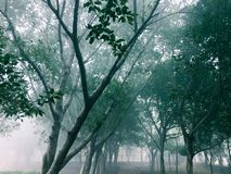 Bomen in een weg in een speelplaats royalty-vrije stock fotografie
