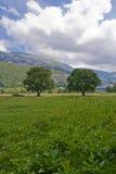 Bomen in een weide Royalty-vrije Stock Fotografie