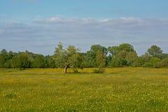 Bomen in een zonnige weide met vele gele wildflowers royalty-vrije stock fotografie