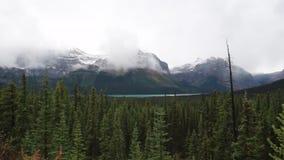 Bomen en bergen van het Banff de de Nationale Park stock videobeelden