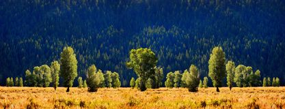 Bomen en Berghelling Royalty-vrije Stock Foto