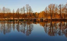 Bomen en Bezinning in Water Stock Fotografie