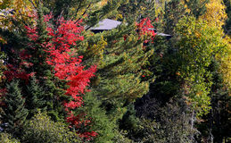 Bomen en bladeren op de Indische zomer, Quebec, Canada Stock Fotografie