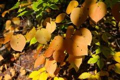 Bomen en bladeren op de Indische zomer, Quebec, Canada Stock Foto's