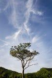 Bomen en blauwe hemel Stock Afbeeldingen