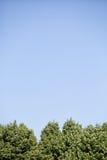 Bomen en blauwe hemel Royalty-vrije Stock Afbeelding