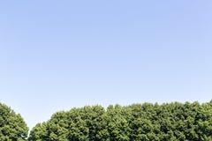 Bomen en blauwe hemel Royalty-vrije Stock Foto's