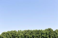Bomen en blauwe hemel Stock Foto