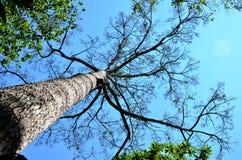 Bomen en blauwe hemel Royalty-vrije Stock Foto