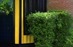 Bomen en bloemen als omheining voor het huis worden geplant dat stock fotografie
