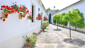 Bomen en bloemen op de witte straten stock afbeelding