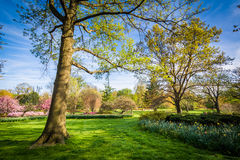 Bomen en bloemen in Sherwood Gardens Park, in Baltimore, Maryla Royalty-vrije Stock Fotografie