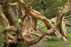 Bomen en bos in Nuwara Eliya in Sri Lanka Royalty-vrije Stock Afbeelding