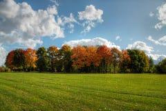 Bomen en boslandschap. Royalty-vrije Stock Foto
