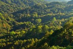 Bomen en bossen Stock Afbeelding