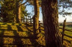 Bomen en Cedar Fence in Avondzonneschijn royalty-vrije stock afbeeldingen