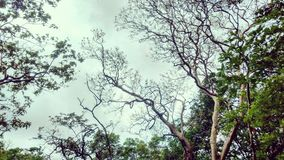 Bomen en de hemel Stock Foto