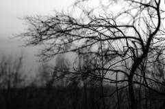Bomen en de mist Stock Fotografie