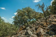 Bomen en droge struiken op een rotsachtige die heuvelhelling door mos wordt behandeld stock foto