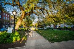 Bomen en gang bij een park in Mount Vernon, Baltimore, Maryland royalty-vrije stock foto