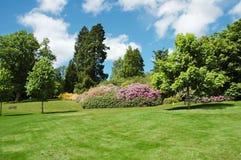 Bomen en gazon op een heldere de zomerdag Stock Foto