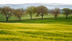 Bomen en gebied Royalty-vrije Stock Afbeelding