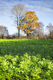 Bomen en gebieden in de herfst Royalty-vrije Stock Afbeelding