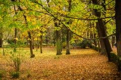 Bomen en gebruind en vergeelde bladeren in een park royalty-vrije stock afbeeldingen