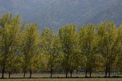 Bomen en gras Royalty-vrije Stock Foto