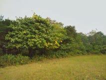 Bomen en grassen stock fotografie