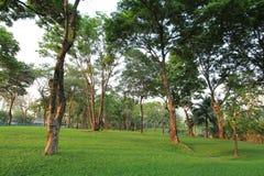 Bomen en groen gras in het park Royalty-vrije Stock Foto