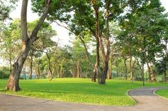 Bomen en groen gras in het park Royalty-vrije Stock Foto's
