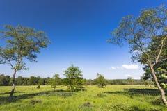 Bomen en Groen Landschap in de Hoge Moerassen, België royalty-vrije stock fotografie