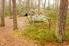 Bomen en grote stenen in het bos Stock Afbeeldingen