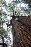 Bomen en hemel Stock Foto