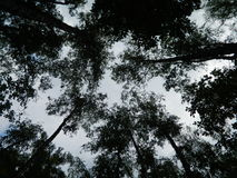 Bomen en Hemel Royalty-vrije Stock Afbeeldingen