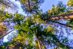 Bomen en Hemel Royalty-vrije Stock Fotografie