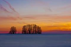 Bomen en hemel bij zonsondergang stock foto