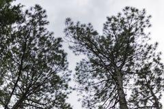 Bomen en hemel in de heuvels Stock Foto