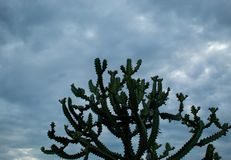Bomen en hemel na regen en bewolking royalty-vrije stock foto