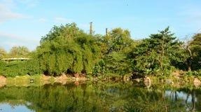 Bomen en het meer in Singapore Royalty-vrije Stock Afbeelding