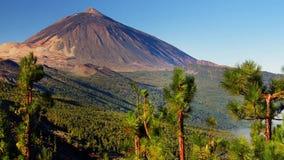 Bomen en het uiteinde van Tenerife Stock Afbeeldingen