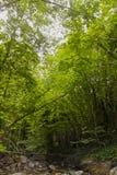 Bomen en kreek bij het meest forrest Stock Foto's