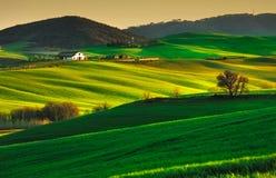Bomen en Landbouwgrond dichtbij Volterra, rollende heuvels op zonsondergang landelijk stock foto's