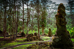 Bomen en… lava Stock Foto's
